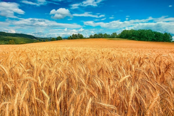 mm_bg-agricoltura